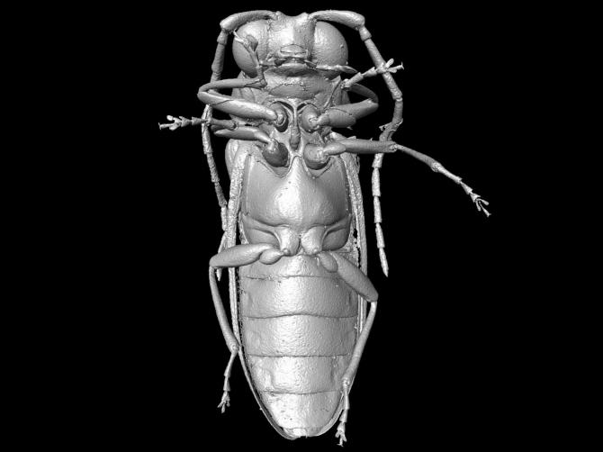 Mysteriomorphidae
