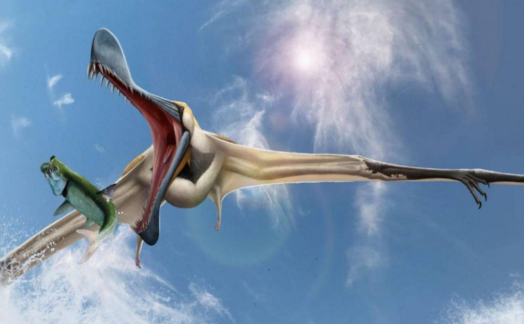 Tropeognathus mesembrinus Tropeognathinae